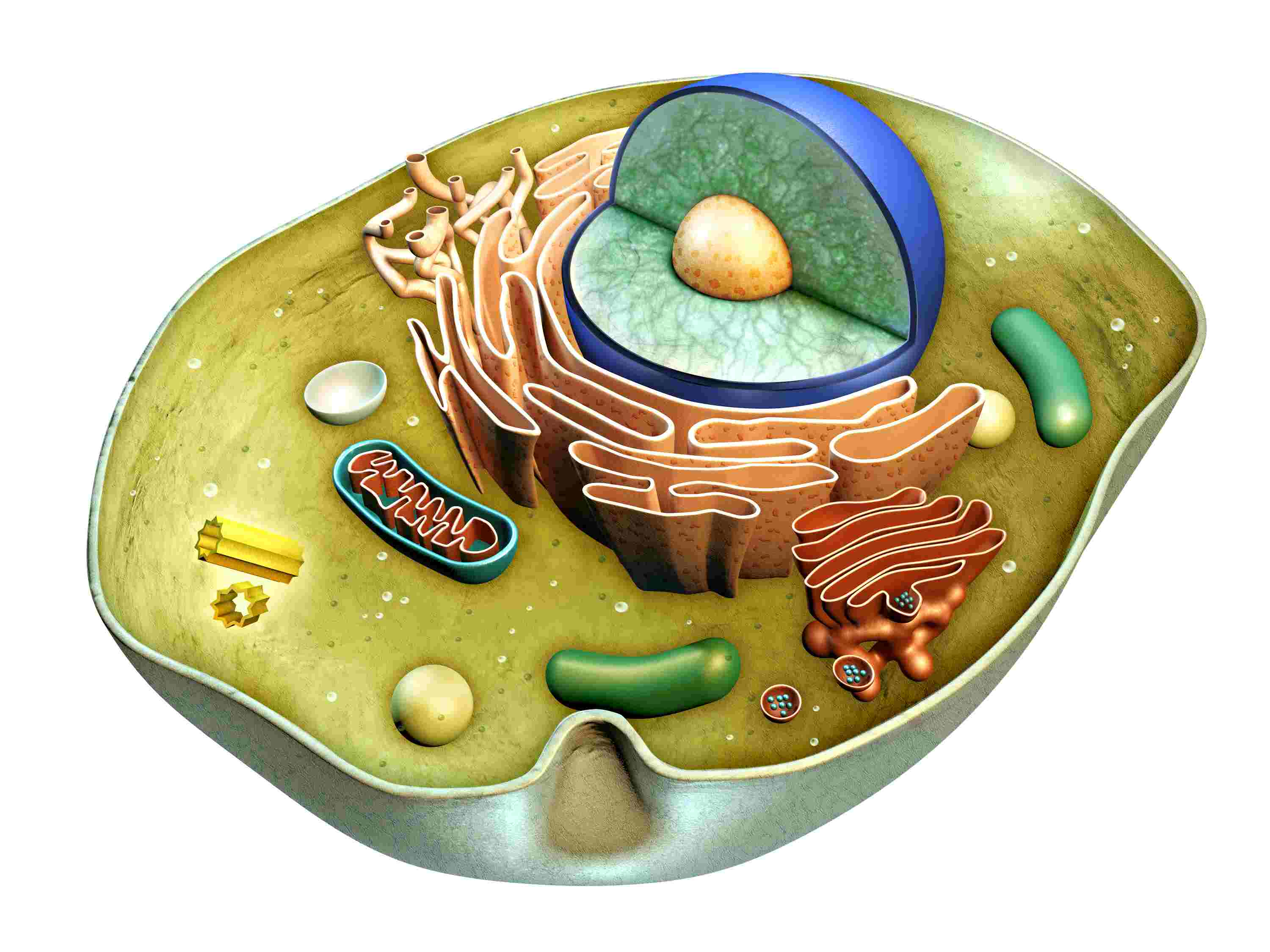 Cell Biology Review