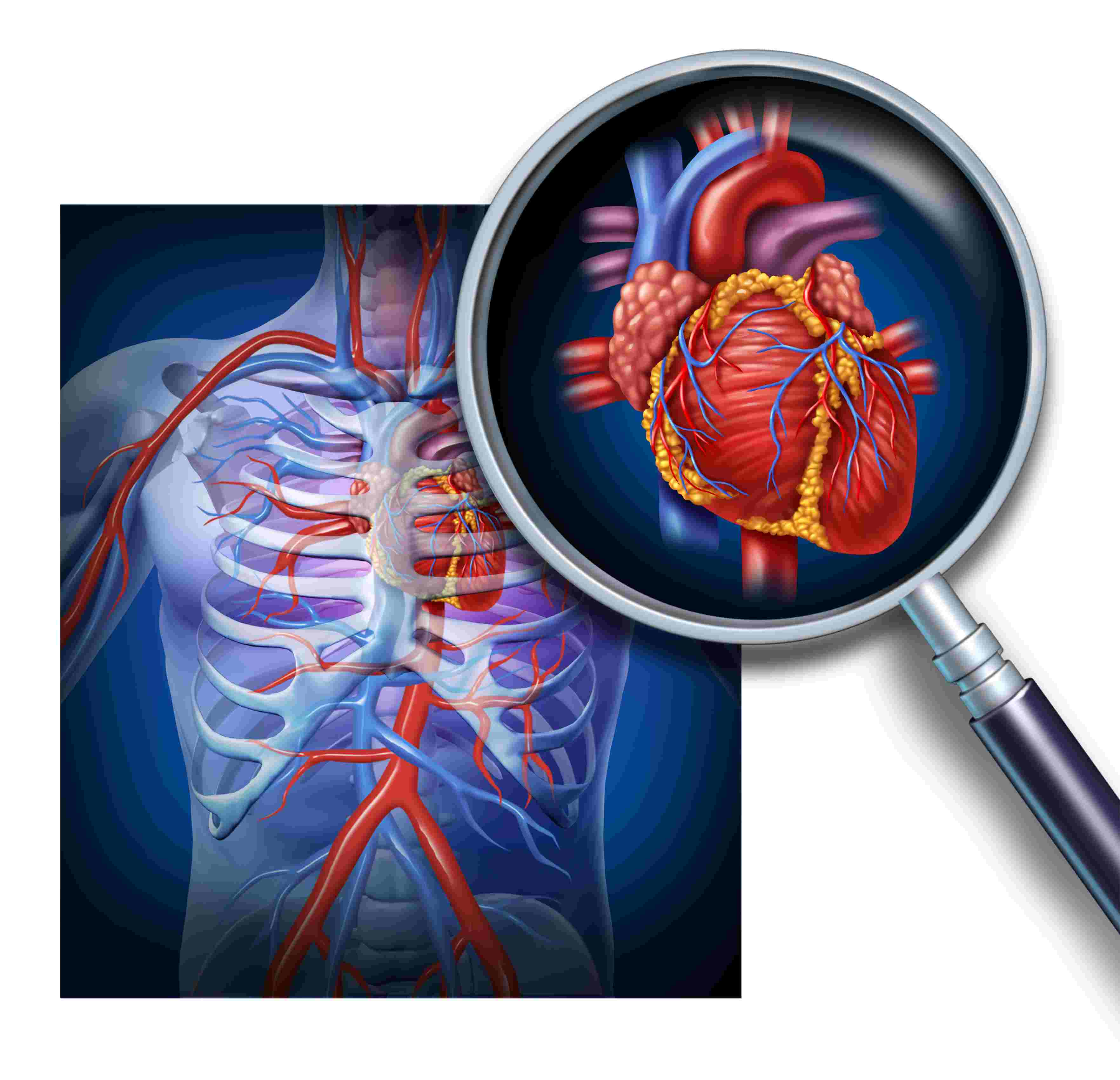 The Circulatory System - Biology Questions and Answers