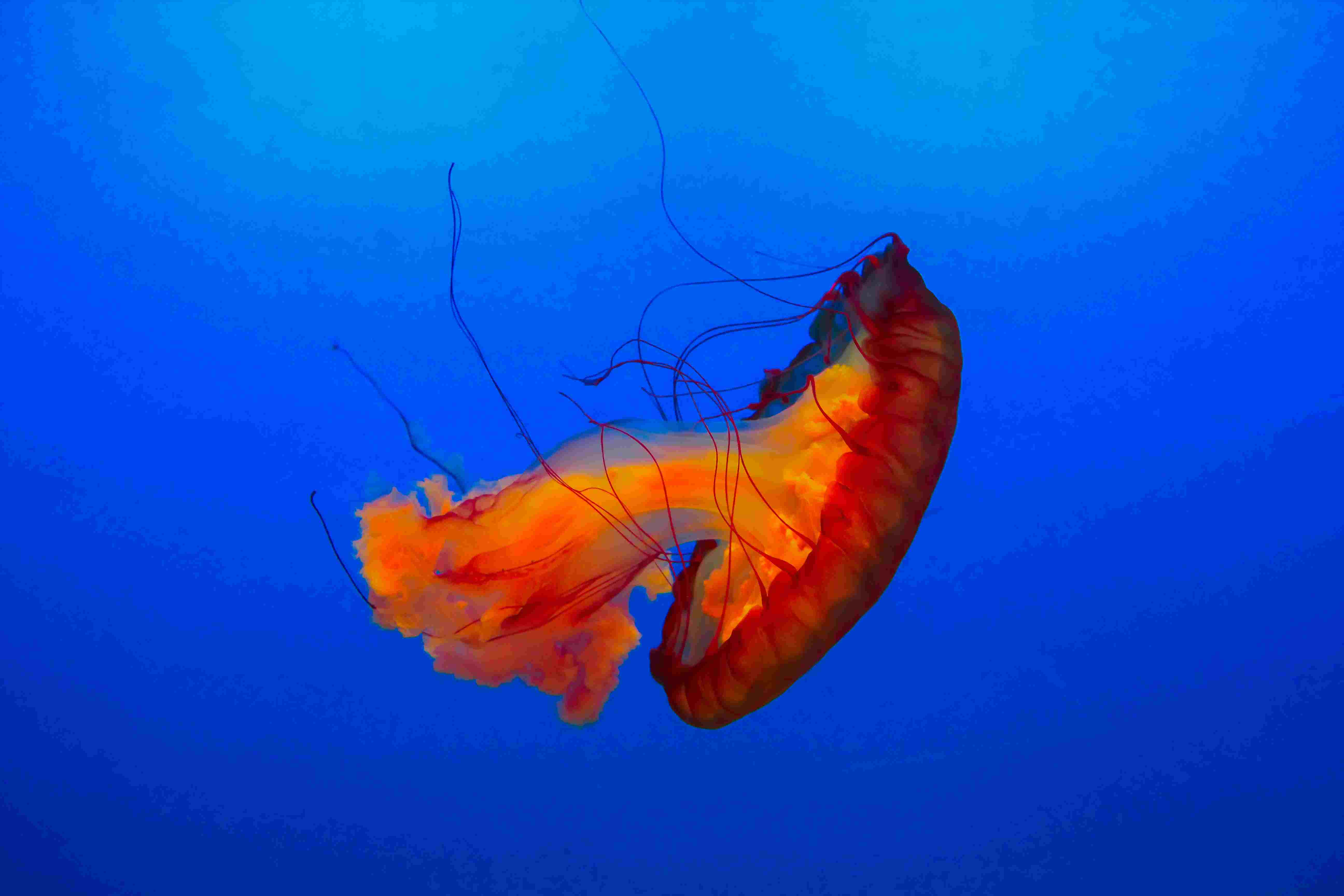 Cnidarians - Biology Questions and Answers