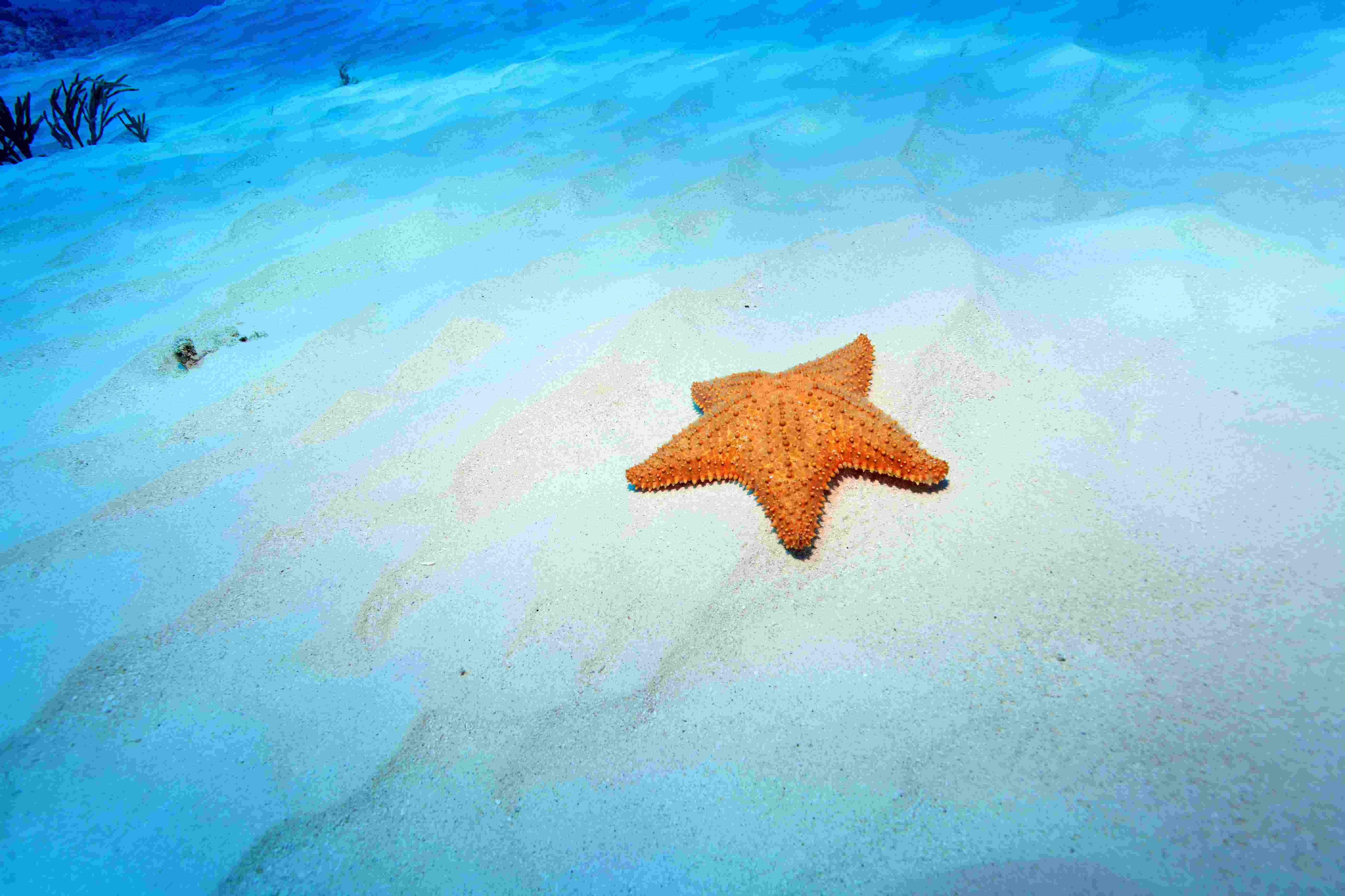 Echinoderms - Biology Questions and Answers