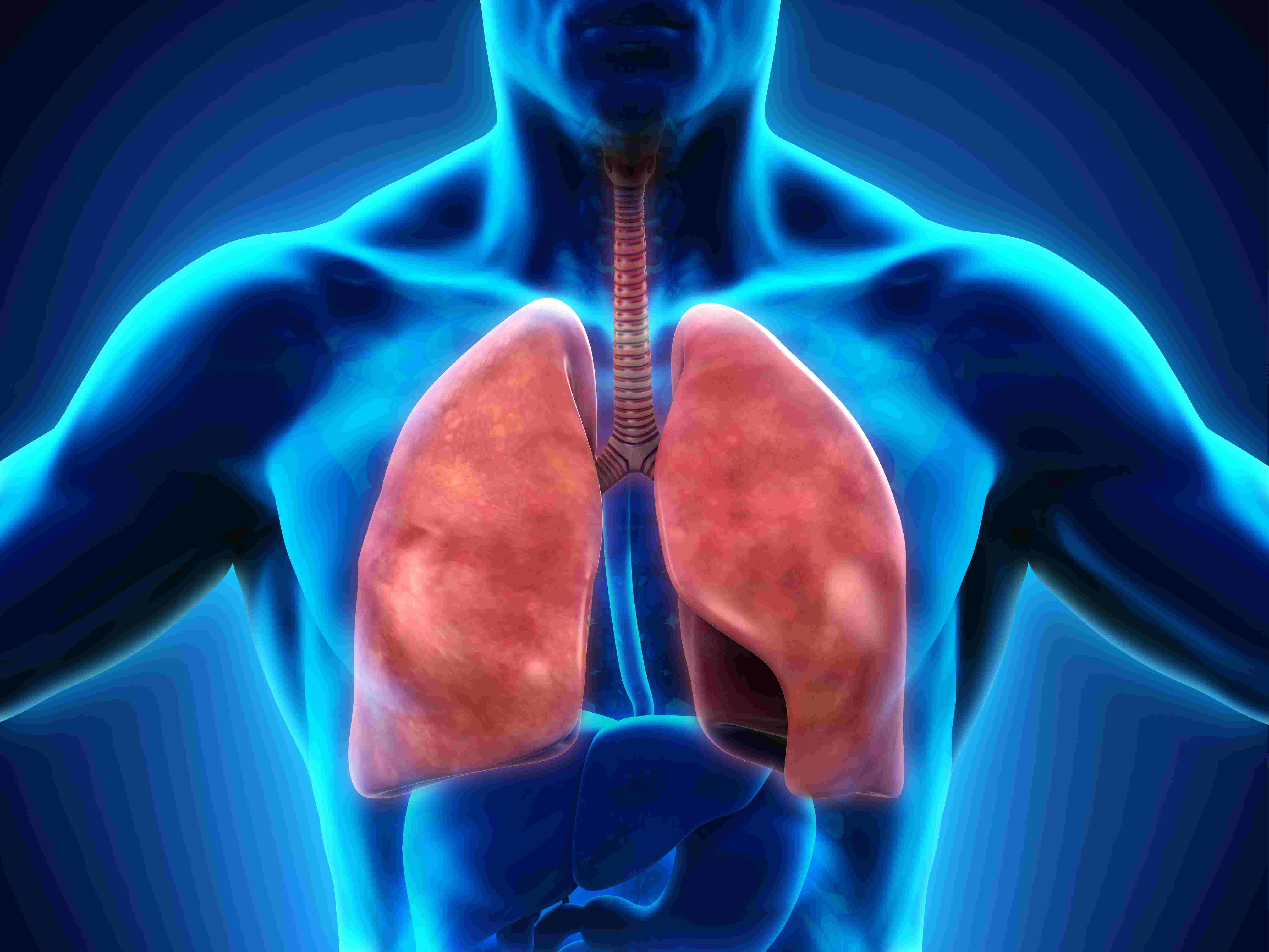 The Respiratory System - Biology Questions and Answers