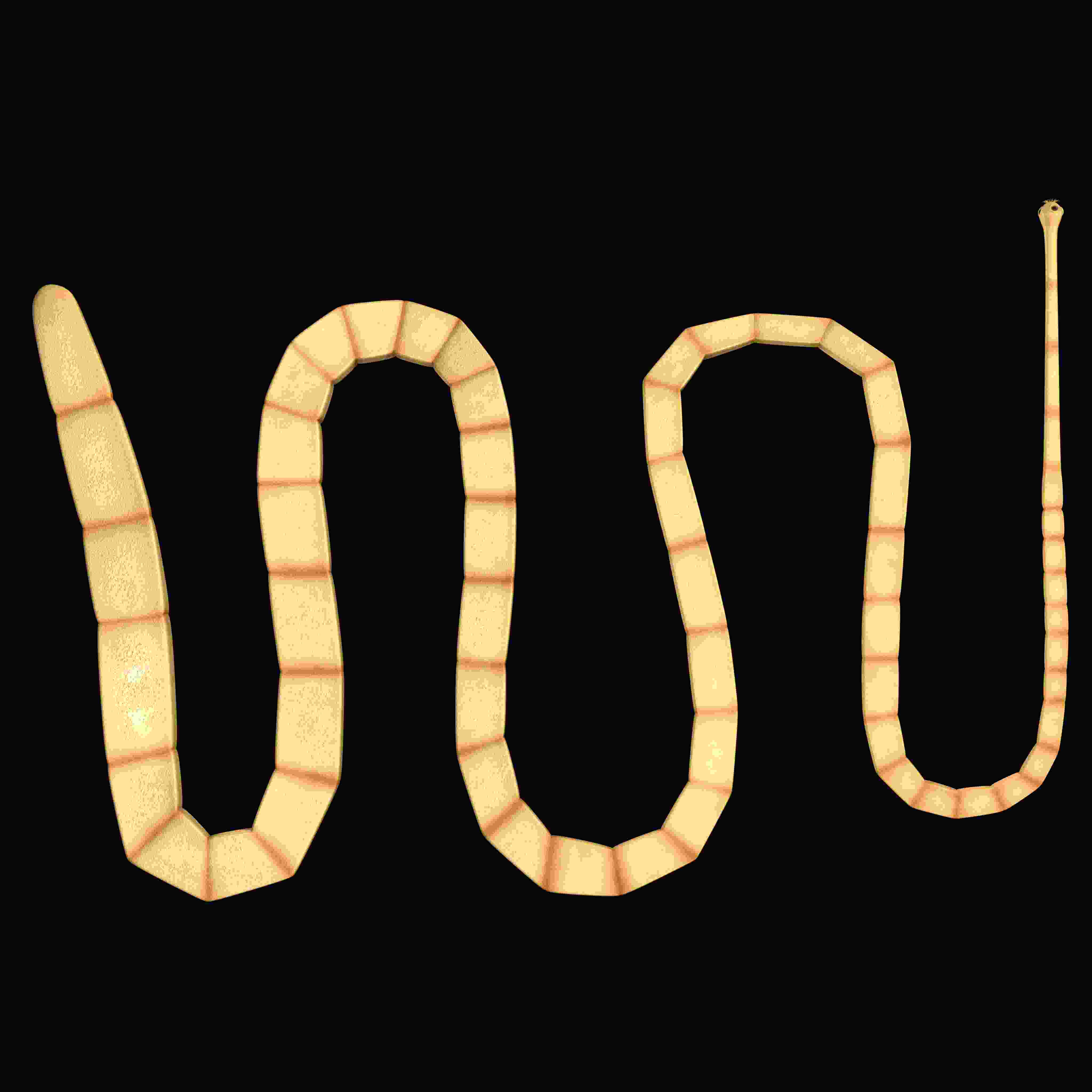 Worm Diseases - Biology Questions and Answers